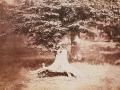 Gustave Le Gray, Fontainebleau, Faggio, 1855-57