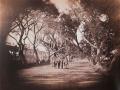 Gustave Le Gray, Promenade de Choubra, Il Cairo, 1861-68