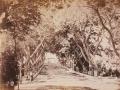 Gustave Le Gray, Giardino Pastré, Alessandria, 1861-68